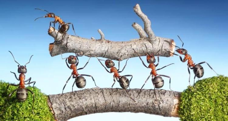 Imagen de unas hormigas que representan un equipo de trabajo unido